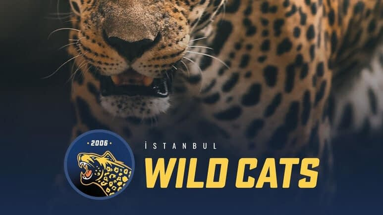 istanbul-wild-cats