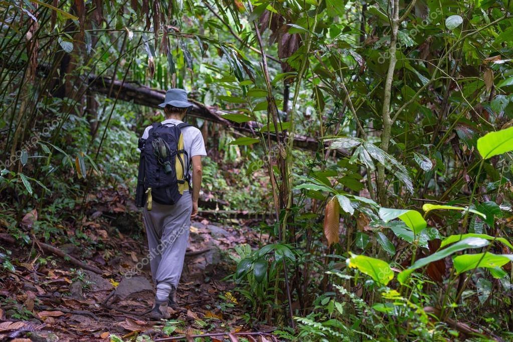 borneo-yagmur-ormanlari